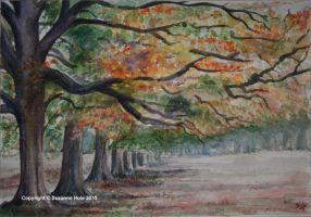 Windsor Great Park - Autumn Trees by SuzanneHole
