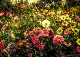 Painting Spring... by Tigles1Artistry