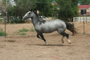 Blue Roan Stock 75 by tragedyseen