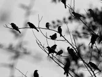 Birds Of A Feather by InayatShah