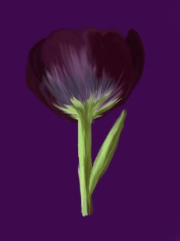the black tulip by gina1881996