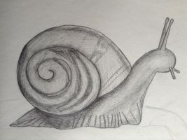Snail by TheGreenNightingale