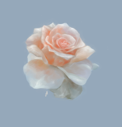 Hybrid Tea Rose by SoloSnail