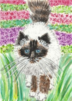 Fluffy  Siamese cat watercolor  aceo painting by tulipteardrops