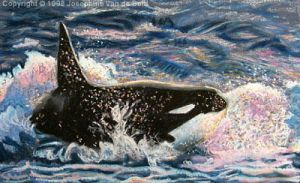 Orca in oil pastels by josephine76