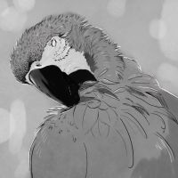 #33 Macaw by Quinfu