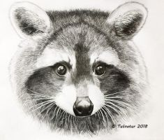 Raccoon (Procyon lotor) by Tulinatur