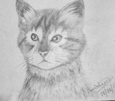 cat pencil drawing by anoop112
