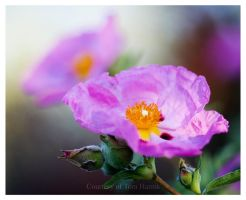 Floral Dream by acutely