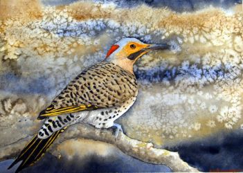 Northern Flicker by Hendershott