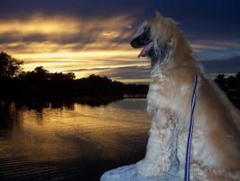 Afghan Hound Dog Arkansas Sunset by caspercrafts