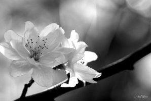 Spring Blossom by jot-woo