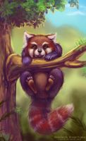 Red panda by Stasushka
