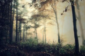 Into The Woods by Weissglut