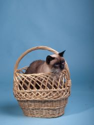 Cat in a basket by c1p0