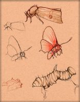 Insect Study 3 by LordMaru4U