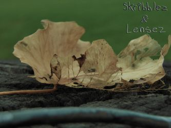Leaf 4 | Set DLM by SkriBlerLenZ