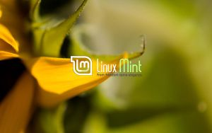 Wallpaper for Mint 39 by malvescardoso