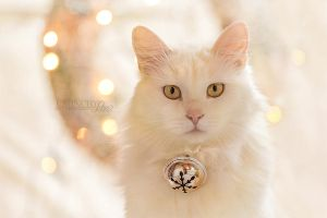 christmas cat 2015 by dark-cayden