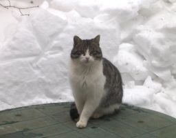 Handsome and the snow wall by Ripplin
