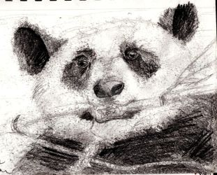 Panda-Scetch by Ministry-Maiden
