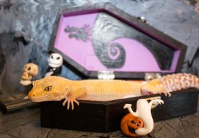 Lucille - Halloween Coffin - 0429 by creative1978