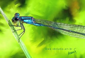 A dragonfly really... by Rajabally
