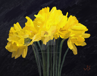 Daffodils a Sign for Spring by TreeStudioUK
