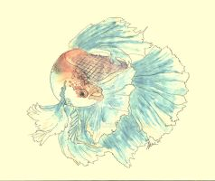 Siamese fighting fish by cassandra4