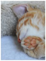 Soft Paws - 9 weeks old Kitten by i-am-enrooted