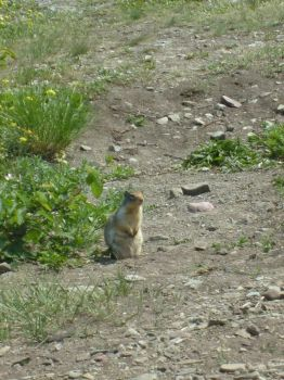 Prairie Dog 3 by Aredith