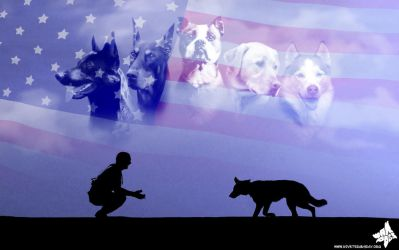 Commission - K-9 Vets Wallpaper by MauserGirl