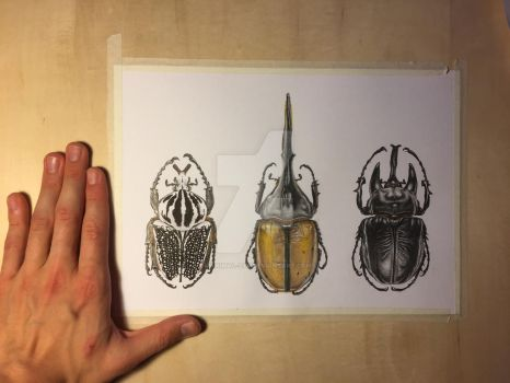 Mega scarabs by Manimal-ZYK