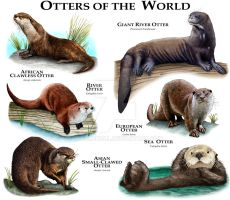 Otter of the World by rogerdhall