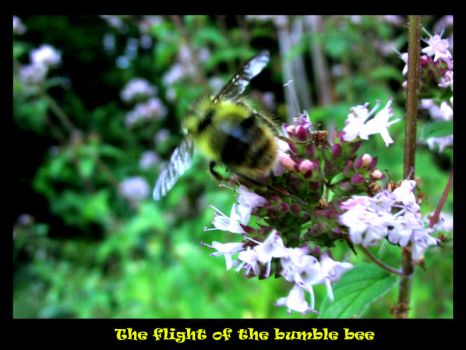 The flight of the bumblebee by casperdeaf
