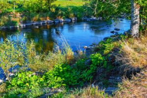 Riverbed II by Aenea-Jones
