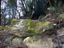 Rocks In Woods 08 by Gracies-Stock
