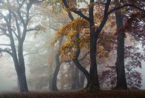 Autumn Wonderland by aw-landscapes