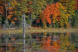 Autumn in Ontario by Rebacan