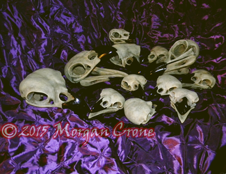 Lots of Skulls by MorganCrone