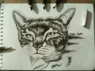 A friend's cat by Crystella4