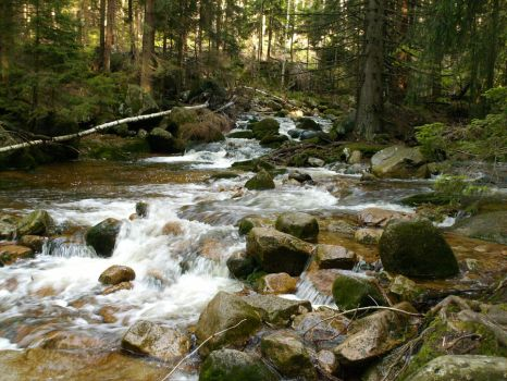 Stream in forest by blejs