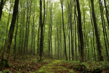 green forest stock large by marlene-stock