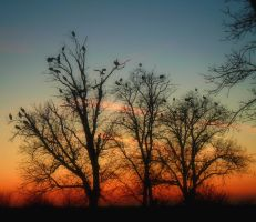Storks at sunset by VasiDgallery