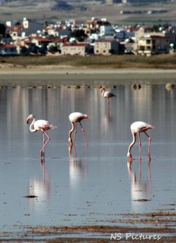 Flamingos by Poolbandit