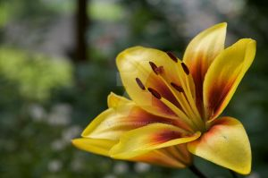 yellow passion 1 by crisland