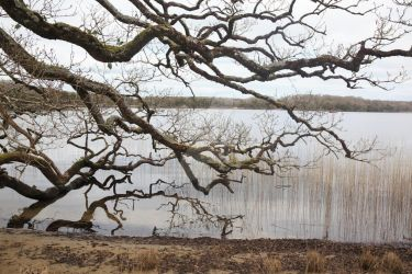 Tree dipping into still water. Kerry, Ireland. by Aodhagain61