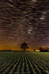 Martley Tree Star Trails by Penson37
