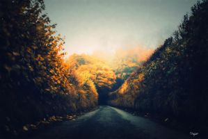 The Road by Trajan-pro