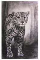 A Jaguar by Alvin-and-the-wild